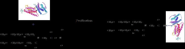 Y-NHS PEGylation